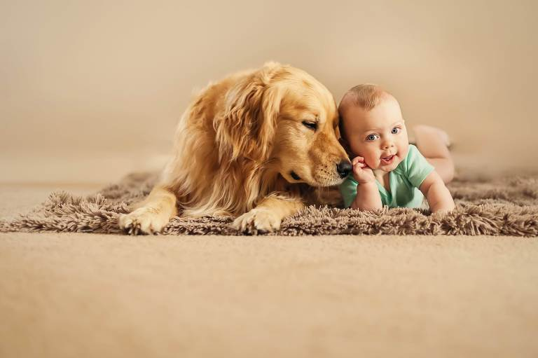 golden retriever and baby